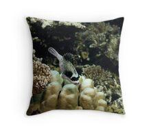 Exploring the reef Throw Pillow