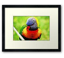 Rainbow Lorikeet #2 Framed Print