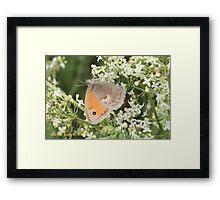 Small Heath Coenonympha pamphilus Framed Print