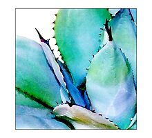 Agave #1 - Postcard by Michelle Bush