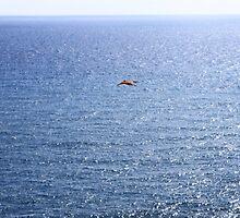 Ocean's Freedom by anasophia