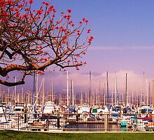 Santa Barbara, USA, Harbour by MichelleRees