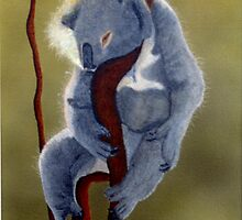 Sleeping Koala by brianlart