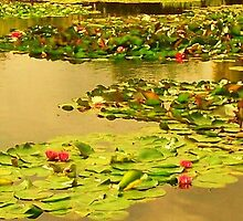 Lily Pads, England by MichelleRees