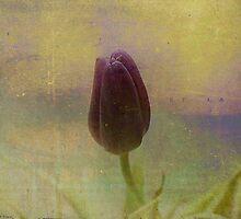 A Single Tulip by Sharon A. Henson