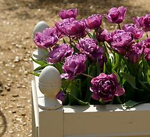 an armload of mauve tulips  by BronReid