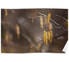 'Catkins' Poster
