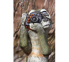 What Ladybirds? Photographic Print
