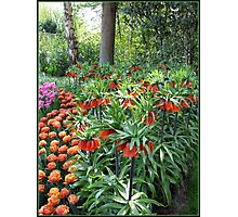 Tulips and Crown Imperials, Keukenhof Gardens, Holland Photographic Print