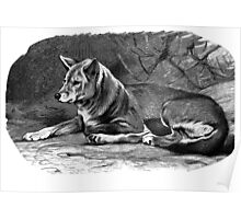 Black and white illustration of the Dingo Poster