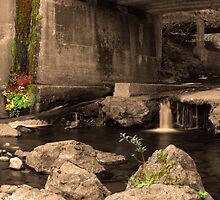 Urban Nature Revisited by USGolfers