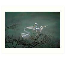 Avery Island Egrets--Nest Building Time  Art Print