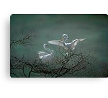 Avery Island Egrets--Nest Building Time  Canvas Print