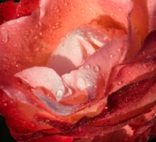Chiaroscuro Rose – A Gift From My Mother's Garden Sticker