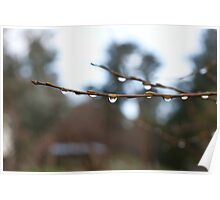 Reflections in a Water Droplet on a Willow Branch Poster