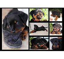 Seven Faces of Mollie Photographic Print