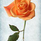 golden rose by OldaSimek