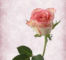 rose by OldaSimek
