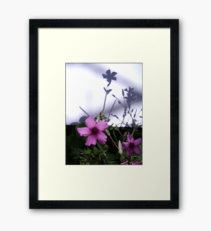 Flowers and Shadows Framed Print