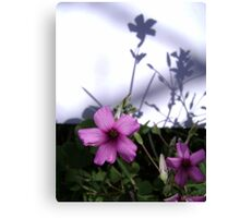 Flowers and Shadows Canvas Print