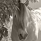 Fjord Horse in Black and White by livinginoz