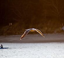 Salmon River Gull and Kayaker - Lincoln City, Oregon by USGolfers