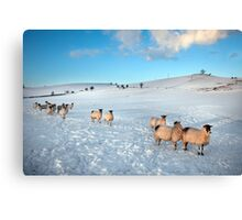 Not Frosties For Breakfast Again ! Canvas Print