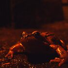 frog at large by armadillozenith