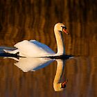 Mute Swan by Neil Bygrave (NATURELENS)