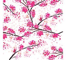 Pink cherry blossoms Oriental Sakura watercolor  Photographic Print