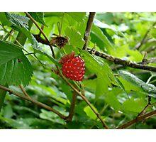 Fresh fruit Photographic Print