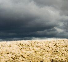 Something wicked, Dartmoor by lucyturnbull