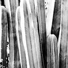 Cactus in the Marjorelle Gardens, Marrakech by lucyturnbull