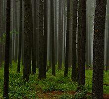Cypress Hills, Saskatchewan by prairielight