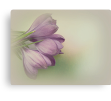 Spring embrace Canvas Print