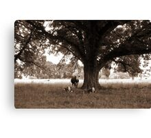 A Good Season, Uralla, Northern Tablelands, NSW, Australia Canvas Print