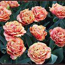 Frilled Tulips - Keukenhof Gardens, Holland by BlueMoonRose