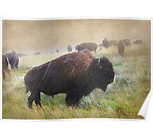 It's Raining Bison Poster