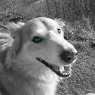 saz with green eyes by xxnatbxx