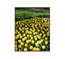 Sunshine Yellow Tulips in the Keukenhof Gardens, Holland Art Print