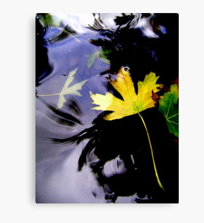 Leaves, Water, Reflection Canvas Print