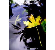 Leaves, Water, Reflection Photographic Print