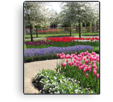 Rows of Colour - Keukenhof Gardens, Holland Canvas Print