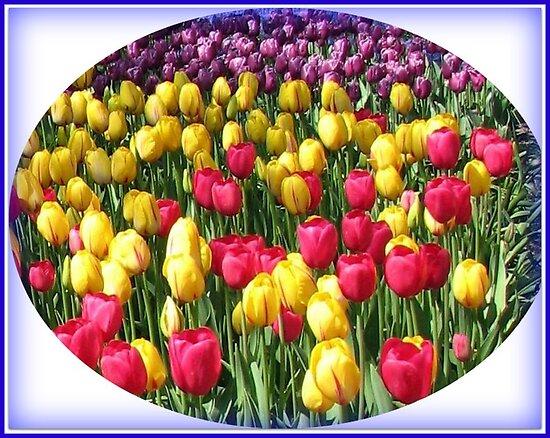 Glorious Array - Keukenhof Tulips Vignette by BlueMoonRose