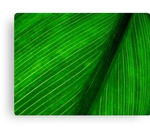 Nature's Pin Stripe Canvas Print