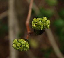 Green bundles  by Jeff Stroud