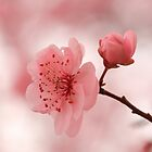 Bringing in Spring by Lisawv