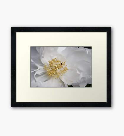Tree Peony and Friend Framed Print