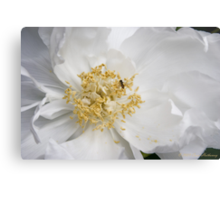 Tree Peony and Friend Metal Print