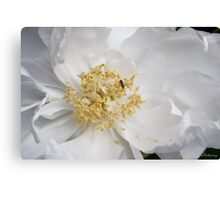 Tree Peony and Friend Canvas Print